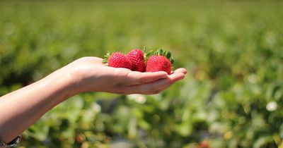 Die Erdbeer-Diät