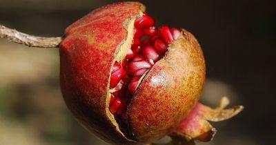 Snack Me, I'm Healthy - Die paradiesische Wunderfrucht