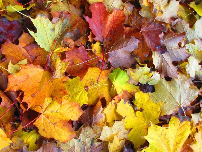 Drei Dinge, die wir am Herbst lieben