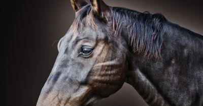 Der neue Beauty-Trend ist eigentlich für Pferde