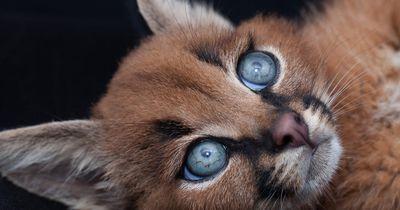 Süüüüüüßßßß! Diese Katzen lieben gerade alle