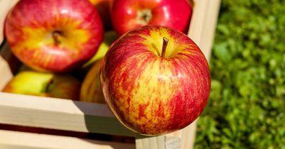 Ein Jahr alte Äpfel werden im Supermarkt verkauft