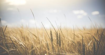 Glutenfreie Ernährung: Sinnvoller Diättrend oder Hysterie?
