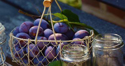 Darum solltest du im August unbedingt Pflaumen essen