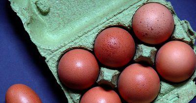 So genial kannst du alte Eierkartons verwenden