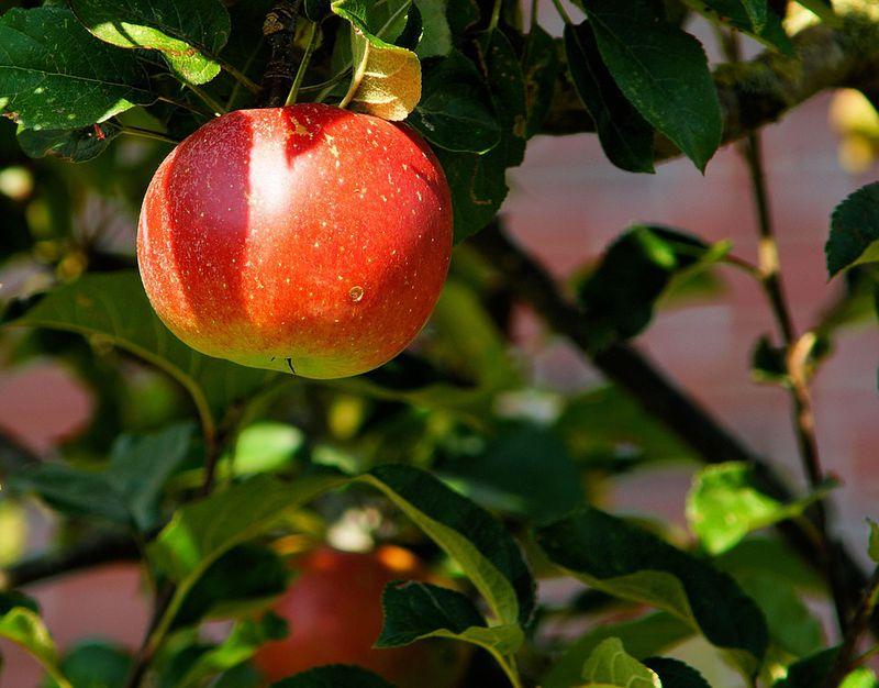 Darum ist Apfelessig die absolute Figur- und Beauty-Geheimwaffe