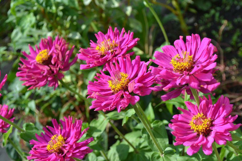 8 Pflanzen die gegen Stress, Depressionen und Angst helfen