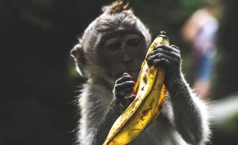 Perfekt zum Abnehmen: Deswegen solltest du Bananenfäden essen