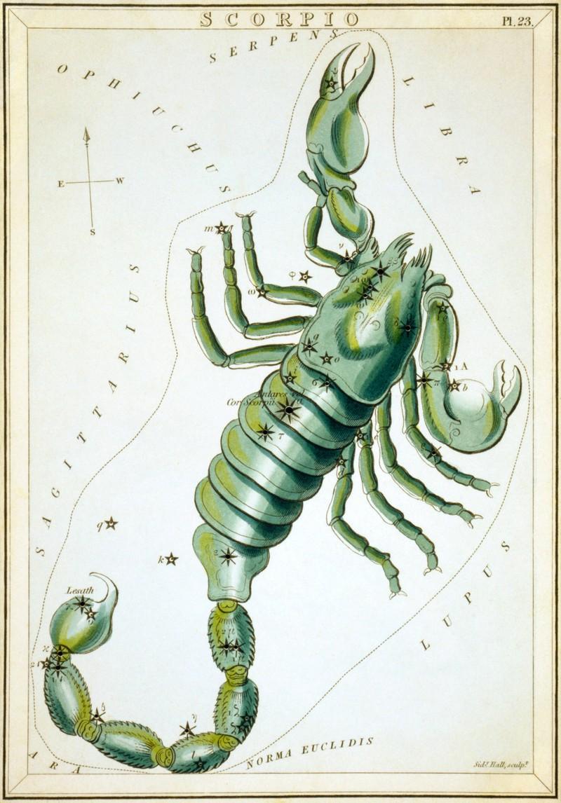 Wer mit dem Skorpion befreundet ist, hat einen treuen Begleiter an seiner Seite.