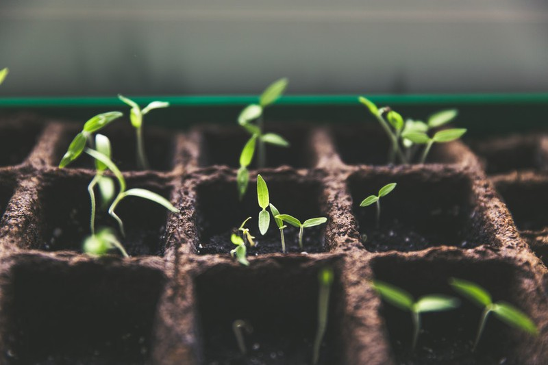 Pflanzen, die in der Erde wachsen