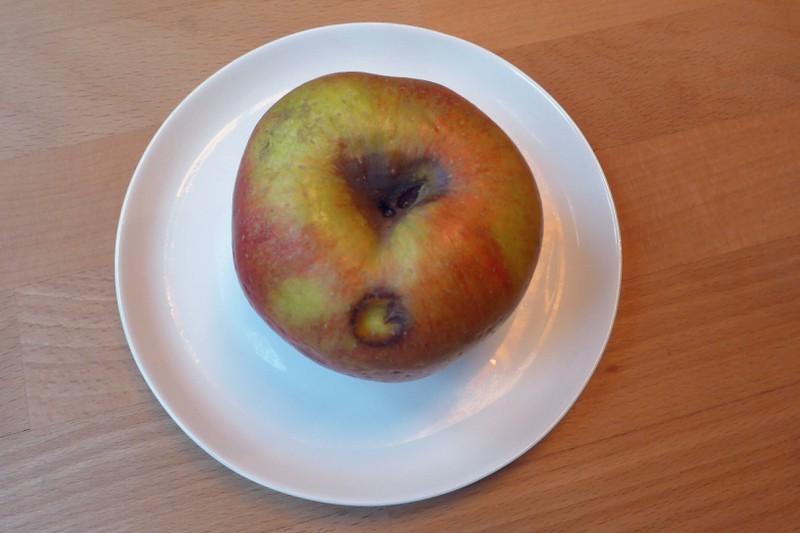 Gammliges Obst solltest du sofort entsorgen, bevor sich kleine Fliegen darauf niederlassen.