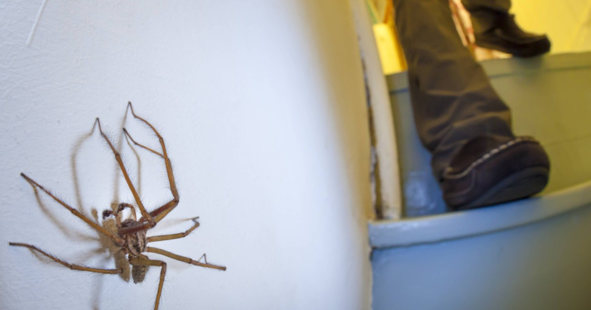 Mit der Pflanze hast du keine Spinnen mehr in der Wohnung