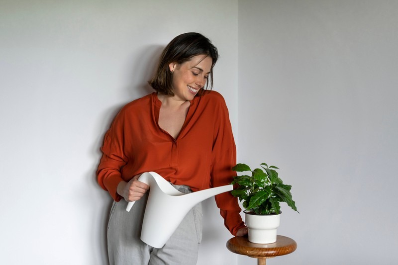 Eine Zimmerpflanze, die mit alten Zwiebelschalen aufgegossen wird, um Schädlinge zu bekämpfen